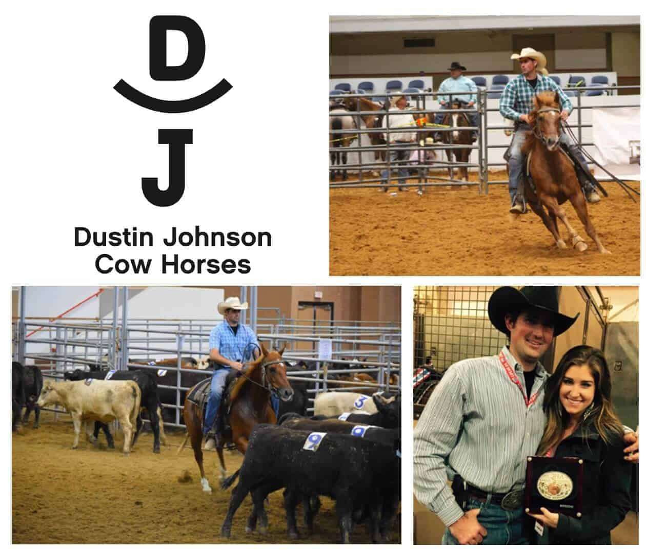 DJ Cow Horses